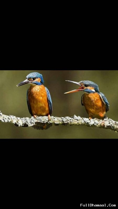 Male female bird